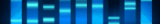 Classical DNA polymérases