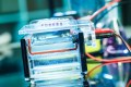 ELITE Protein Ladder : change your standards !