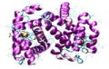 Custom Service : Protein analytics