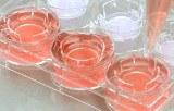 Kits d'étude des cellules