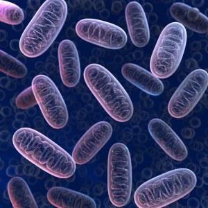 Peptides bioactifs mitochondriaux