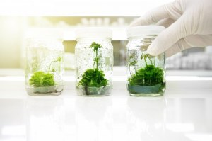 Milieux et récipients de haute qualité pour la culture des plantes