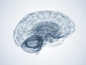 Biomimesys® Brain : Un support pour la culture 3D des cellules neuronales