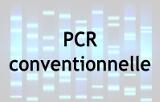 PCR Conventionnelle