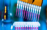 Réactifs pour la PCR