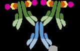 ABC Kits (Avidin/Biotin Complex)