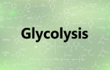 Assay kits - Glycolysis