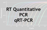 Quantitative RT-PCR - qRT-PCR