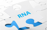 RNA transfection