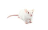 Mouse TARGATT
